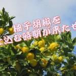 柚子胡椒の作り方やレシピは?作る時期はいつが良いの?