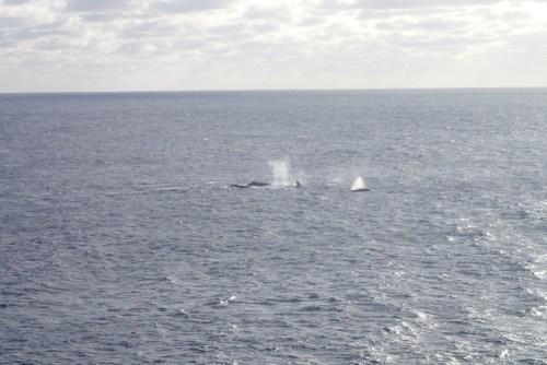 """die Wale noch einmal in """"Nahaufnahme"""""""