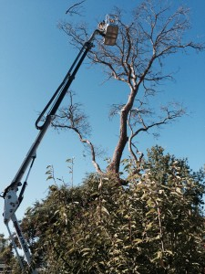 Travel tower hire Yarra trees. spider lift tower hire.