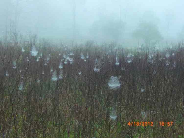 ain drops on Spider Web