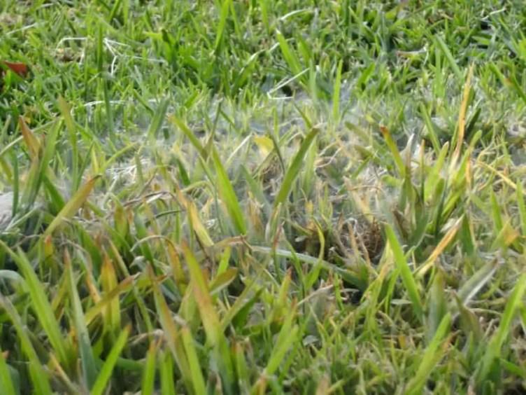 Spider Web in grass
