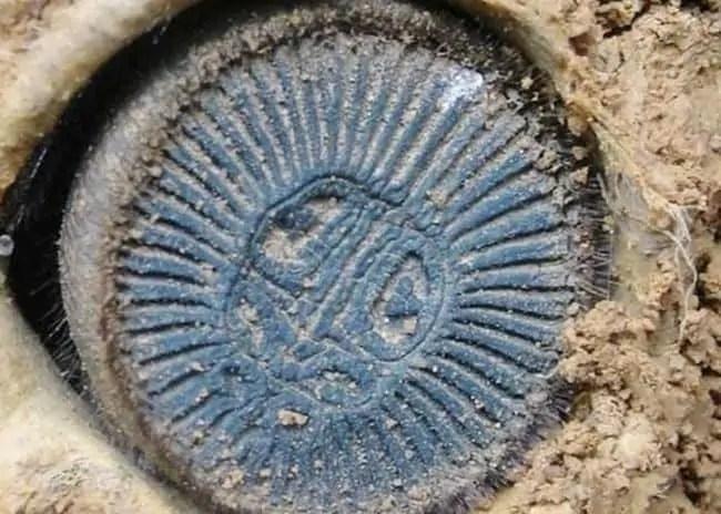 Ravine Trapdoor Spider behind closeup detail cork lid