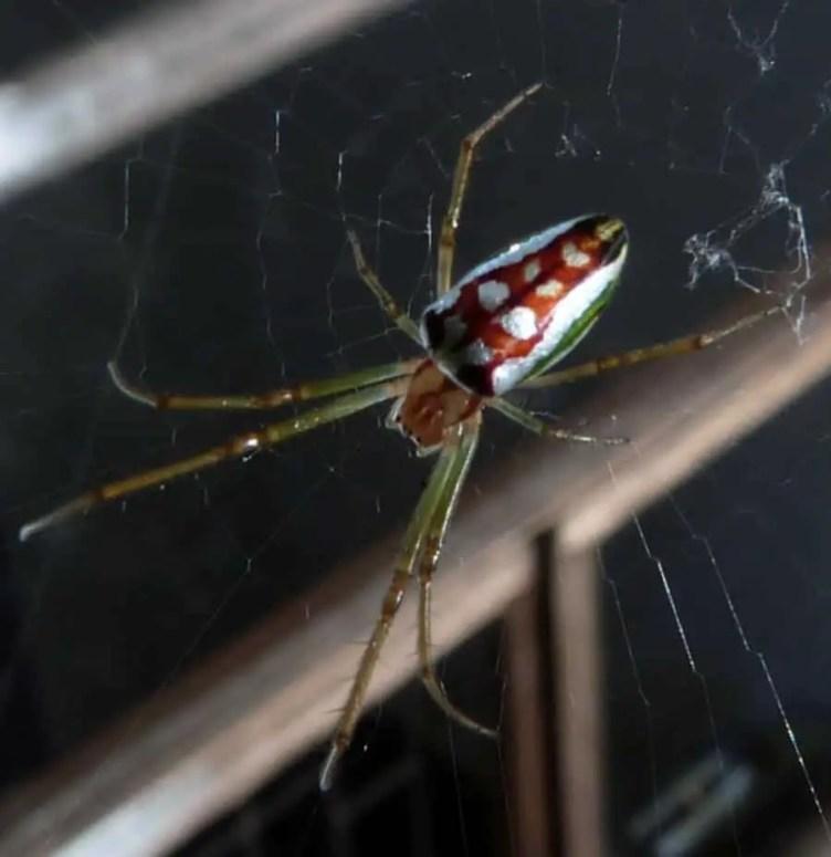 Basilica Spider