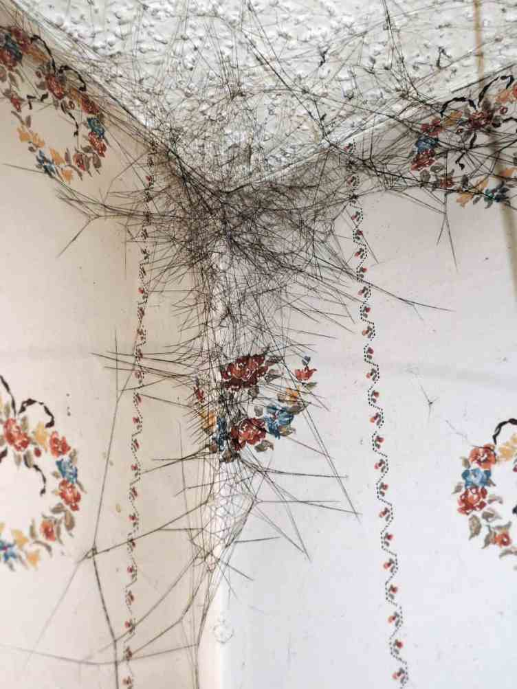 Spider Web in corner cobweb