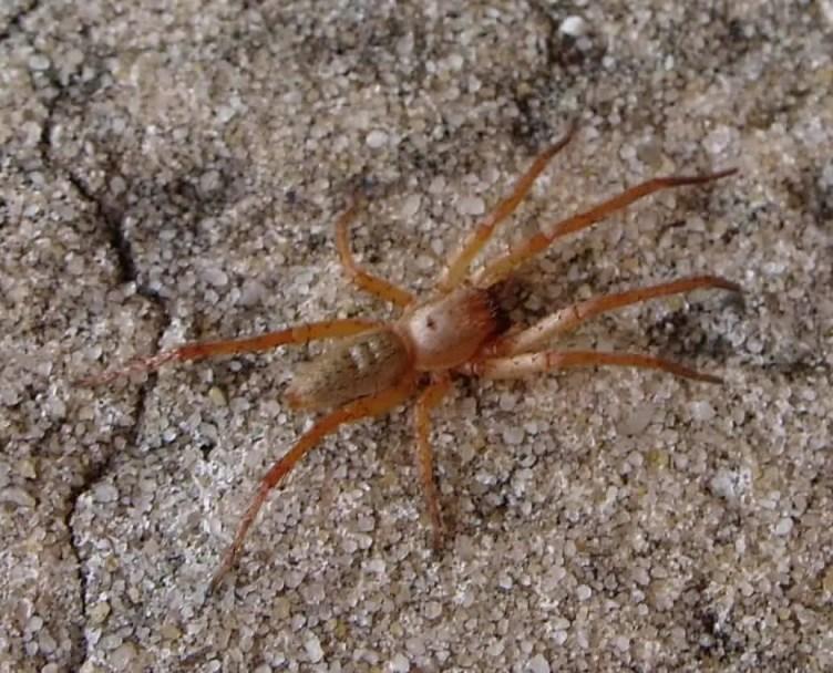 Ghost Spider hibana on ground