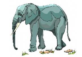 Elefanten Malvorlagen Kostenlos