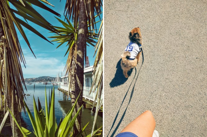 Palm-trees-dog-walk