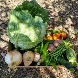 cassetta mista di verdure fresche