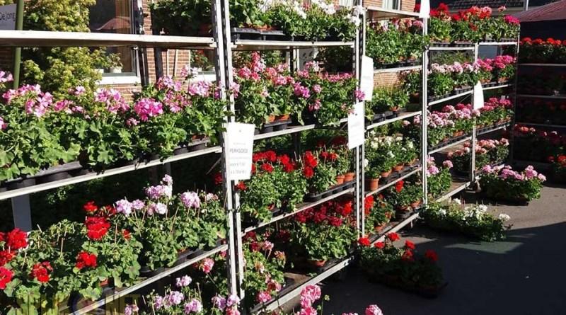 paas plantjesmarkt bloemenshop3borg