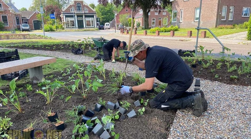 groenstrook beplanting planten