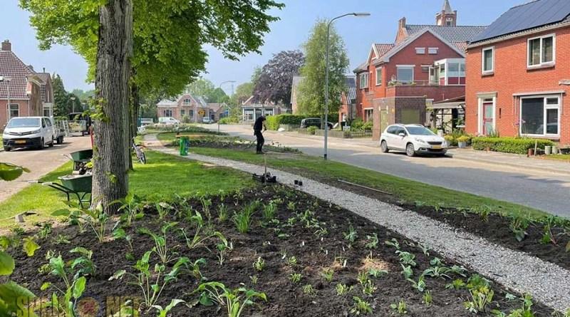 groenstrook beplanting