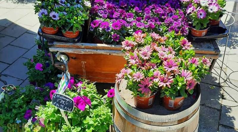 leutje bloemen en plantjesmarkt