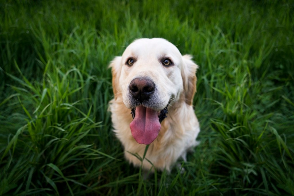 pet emergency fund