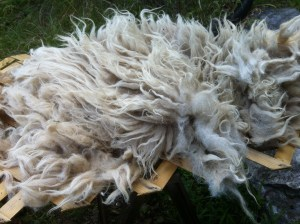 Icelandic Fleece 2013