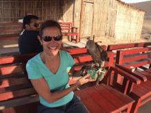 wheelchair accessible desert safari orient tours dubai