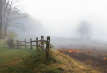 Autumn mist with pumpkins, photo by liz west