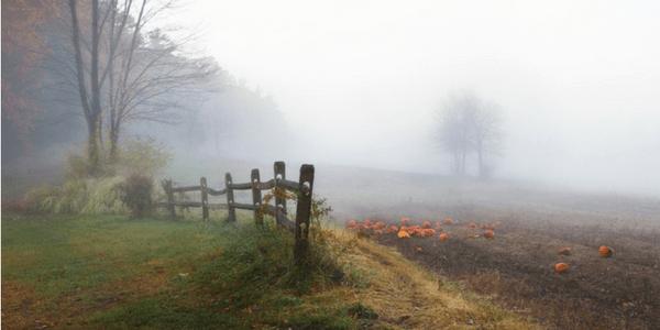 Autumn mist with pumpkins, photo by liz west