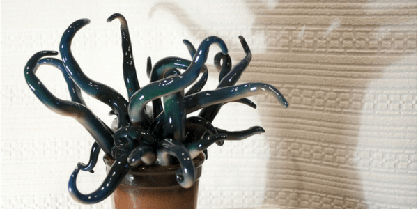 Monster plant resembles Cthulhu, photo by hris Moody