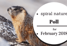 Spiral Nature Poll for February 2018