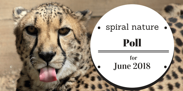 Spiral Nature Poll for June 2018