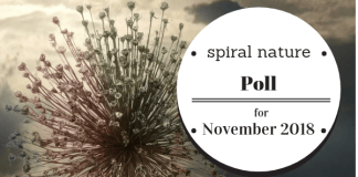 Spiral Nature Poll for November 2018