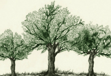 The Hidden Life of Trees, by Peter Wohlleben