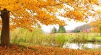 Fall tree, photo by Mark K