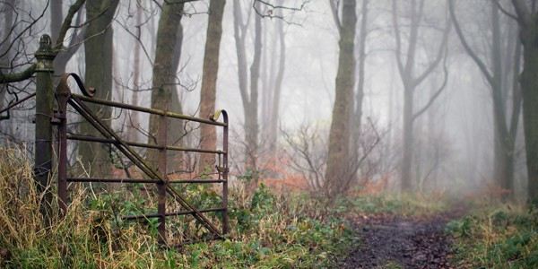 Gate and trees, photo by Al Crompton