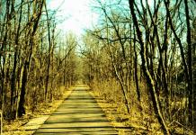 Nature path, photo by noodlesthekuppy