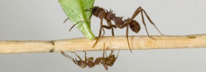 My Effective Step By Plan For Dealing With Carpenter Ants In Your Home