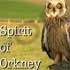 Spirit_of_orkney_banner_thumb