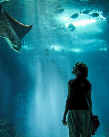 5 Great things to do in Florida with the kids this summer that aren't Disney