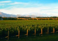 New Zealand wine regions Marlborough