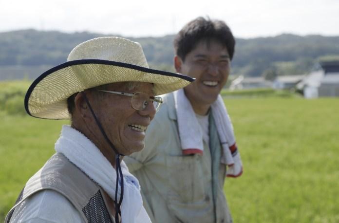 Yamada Nishiki rice farmers from Hyogo Prefecture