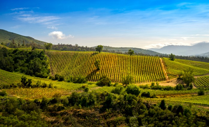 up-and-coming wine regions - cachapoal