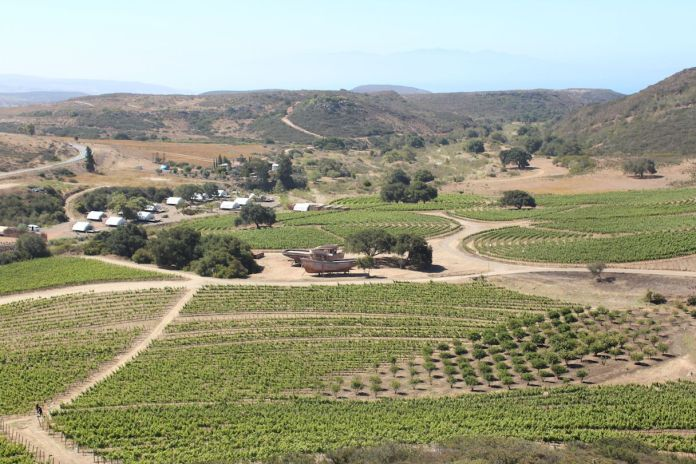 Valle de Guadalupe vineyards