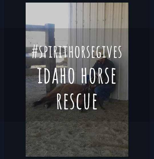 #SpirithorseGives for April – Idaho Horse Rescue