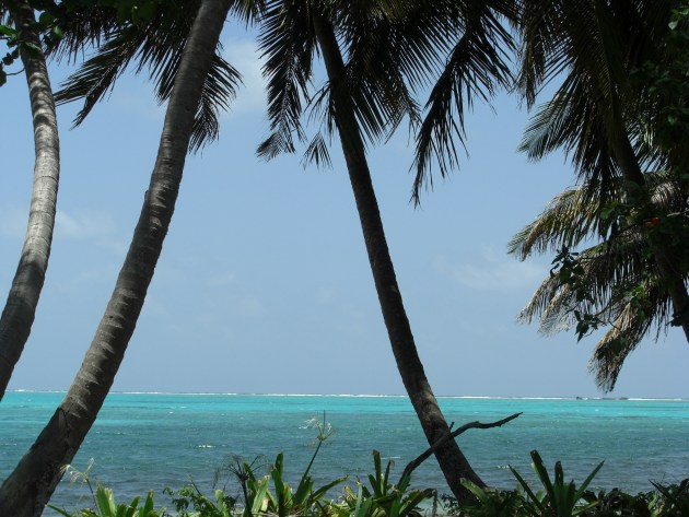 pict - view out to reef through trees on atoll