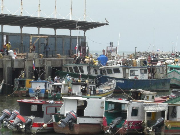 3-fish market boats at docks