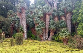 Tasmania Wilderness Explorer Tour Pandani Trees