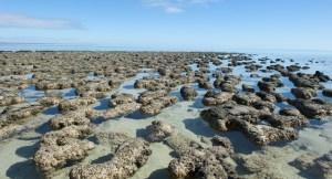 Hamelin Pool Stromatolites WA