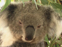 koala outback nsw tour