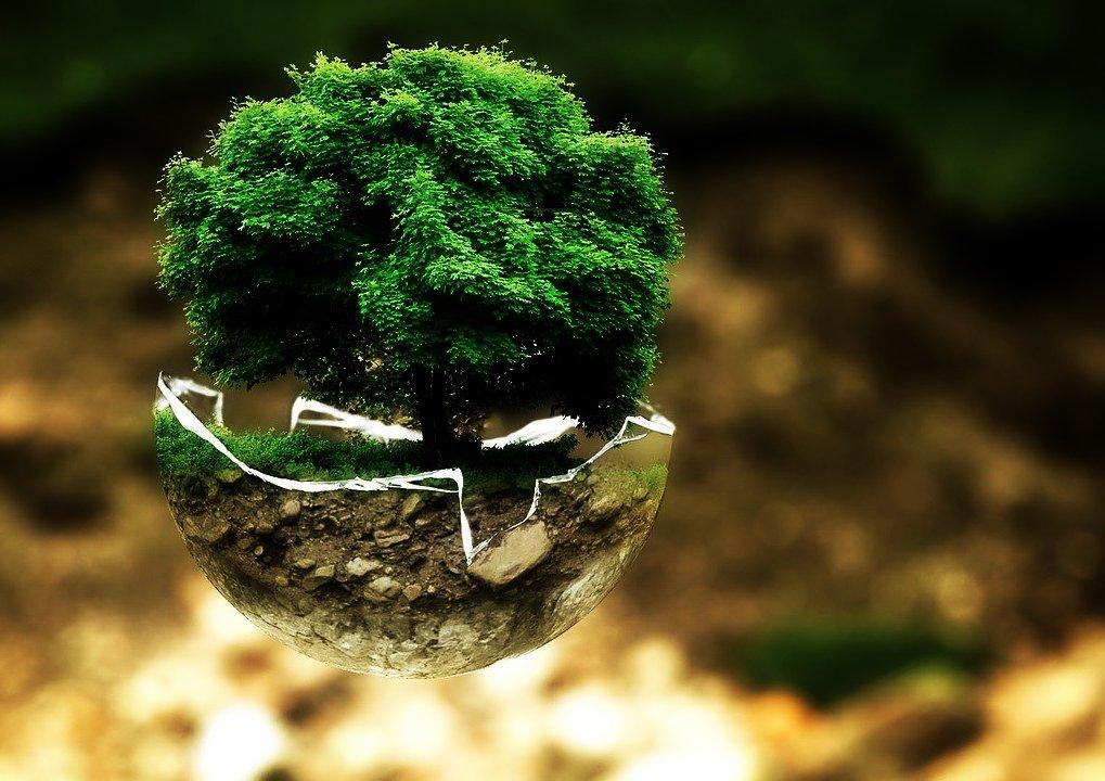 Ökologie und holzverarbeitung