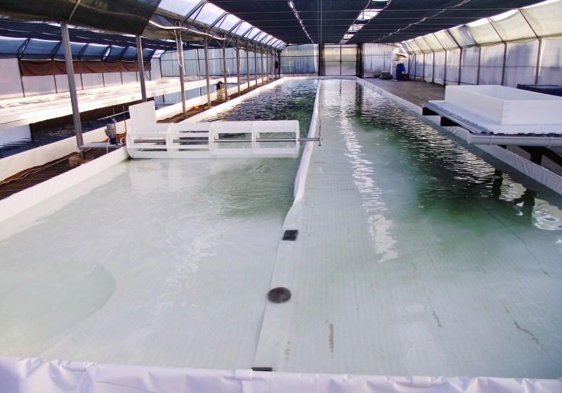 Incorporation de la biomasse dans le bassin