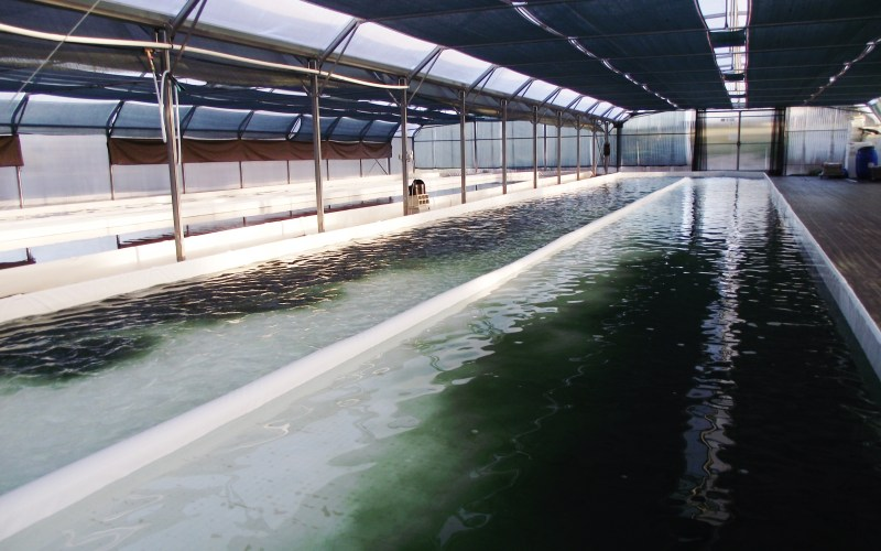 Bassin en cours d'ensemencement