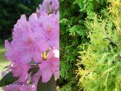 Giftige planter og blomster i hagen
