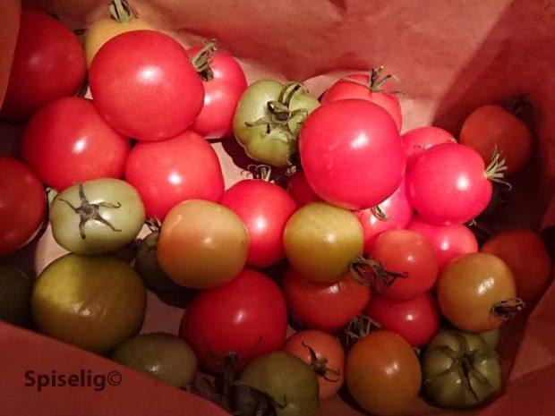 Modne tomater i papirposer
