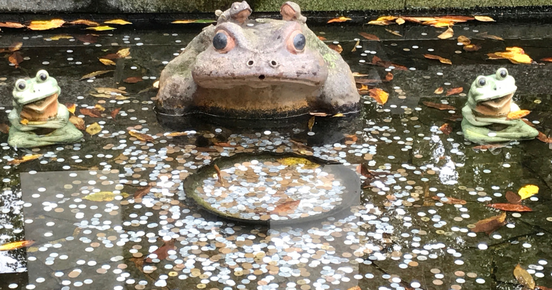 frog coin pond