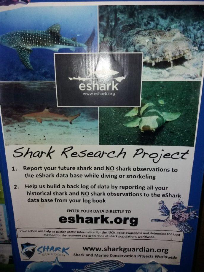 Shark Research Project bij deze duikschool op Phi Phi