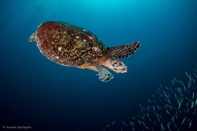 Scuba Diving Koh Lanta